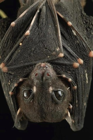I don't really like bats but this little fella is kinda cute