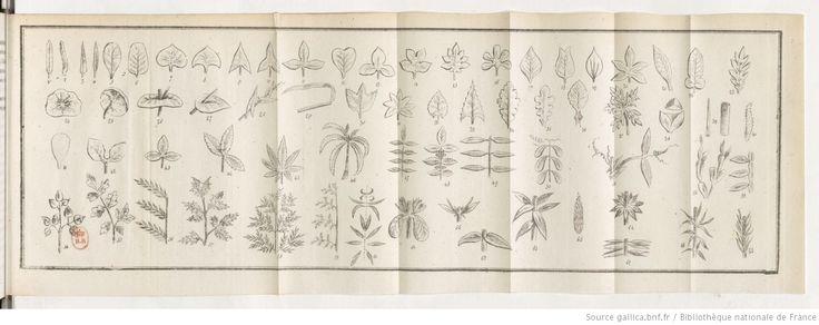 Nouveau manuel de botanique élémentaire et de botanique appliquée à l'agriculture, à la médecine des hommes et des animaux, aux actes industriels et à l'économie domestique.... Tome 1 / par M. Villette... | 1838