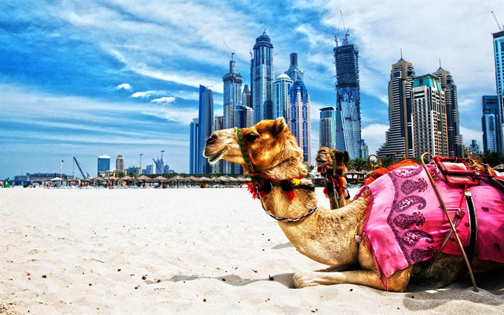 Herunterladen hintergrundbild kamele, hdr, dubai, strand, vereinigte arabische emirate, wolkenkratzer