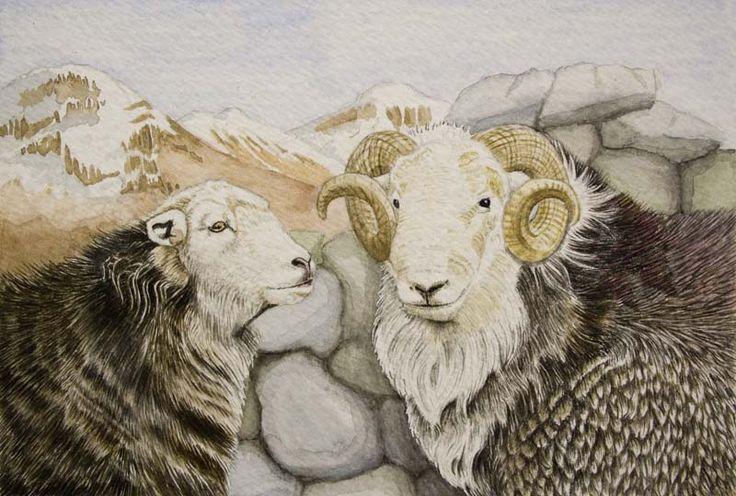 Portfolio - Kelly Archer Wildlife & Pet Portraits  #herdwick #sheep #herdwicks #painting #watercolor #watercolour #stilllife #portraits #petportraits
