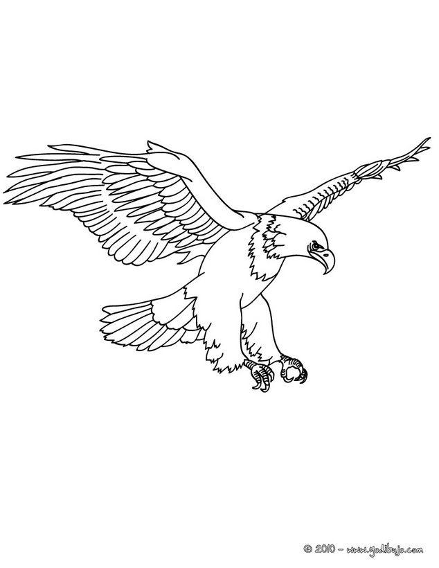 Ms de 25 ideas increbles sobre Aguila dibujo en Pinterest