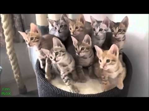 Risota à custa dos gatinhos :D   PARA MIM