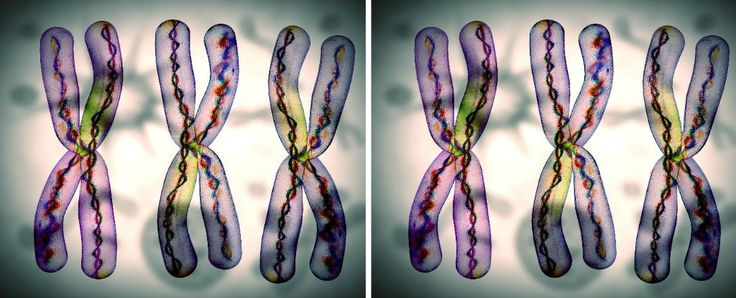 You may not be aware of it, but one of your chromosomes - the X chromosome - is considerably different from the rest, and has posed a puzzle for scientists for years.