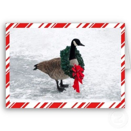 Christmas Ornaments For Sale Canada: Canada Goose Christmas