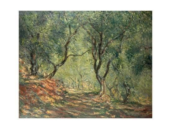 Olive Grove in the Moreno Garden, 1884 Giclee Print by Claude Monet at Art.com