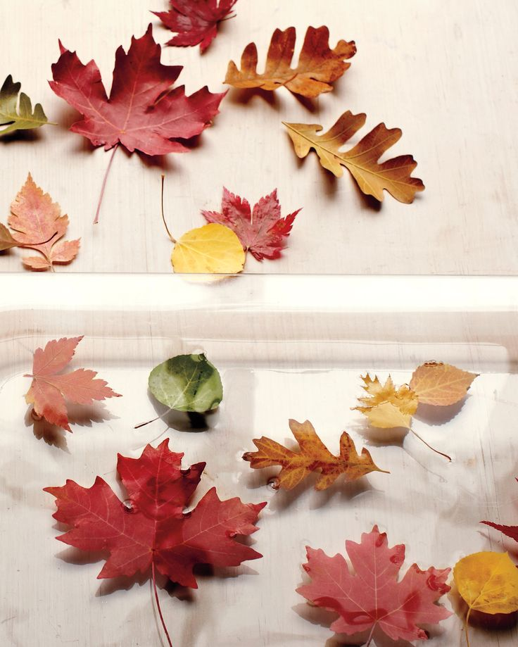 When you craft with fall leaves, it's best to preserve them so they don't get brittle over time. (Pressed leaves keep their color but also become dry, making them best suited for framing.)