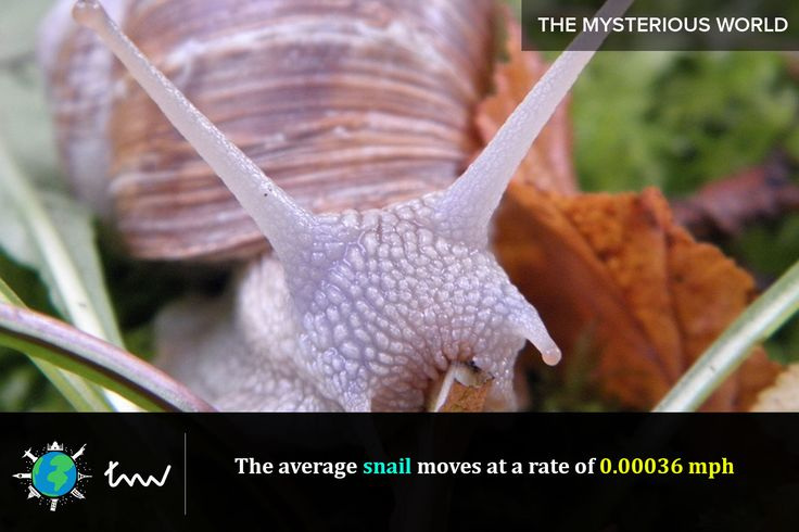 #animals #snail #facts