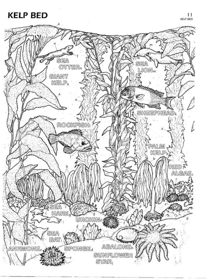 kelp forest coloring pages - color plate 11 kelp bed cecil 39 s nursery kelp forest
