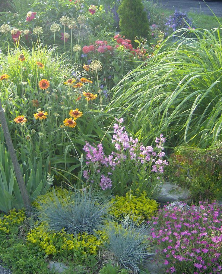 June (again!): paeonia Sword Dance, rosa Cinco de Mayo, gaillardia, penstemon (pink form), sedum, dianthus and grasses