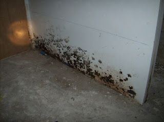 black molds together with their spores travel within the air and cause health problems - Exposure To Black Mold