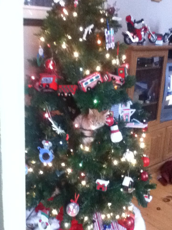 My cat in our christmas tree
