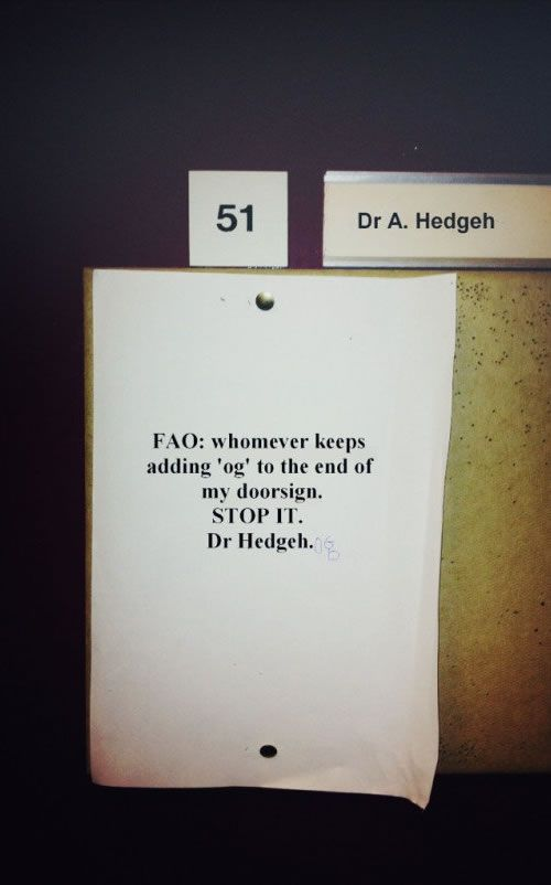 Dr. HedgehDr. Hedgehogs, Laugh, Funny Signs, Funny Stuff, Humor, Funny Photos, Things, Funnystuff, Giggles