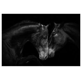 Cuddling Horses Poster - 24