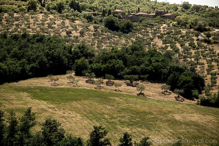 @alessandroiasevoli @Grammaphoto Photos location: il #Fontanaro Organic Olive estate and vacation villas #paciano #umbria #gettingmarried #greenwedding #organicholiday #honeymoonlocation #italiandream  http://countryslowliving.com/