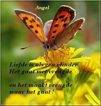 21 mooie kleurrijke vlinder - photo #22