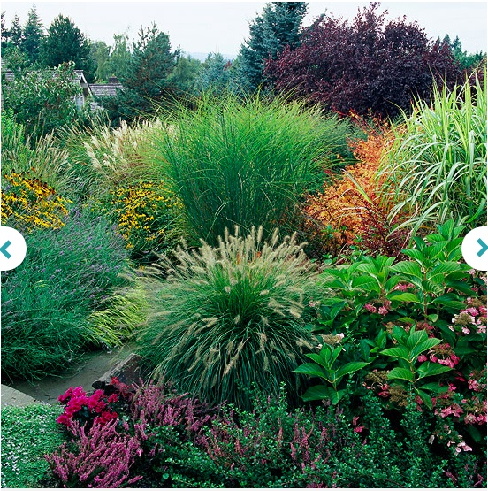 254 best images about ornamental grasses for sun and shade for Full sun ornamental grass