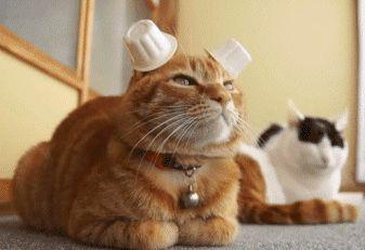 Cats - Imgur