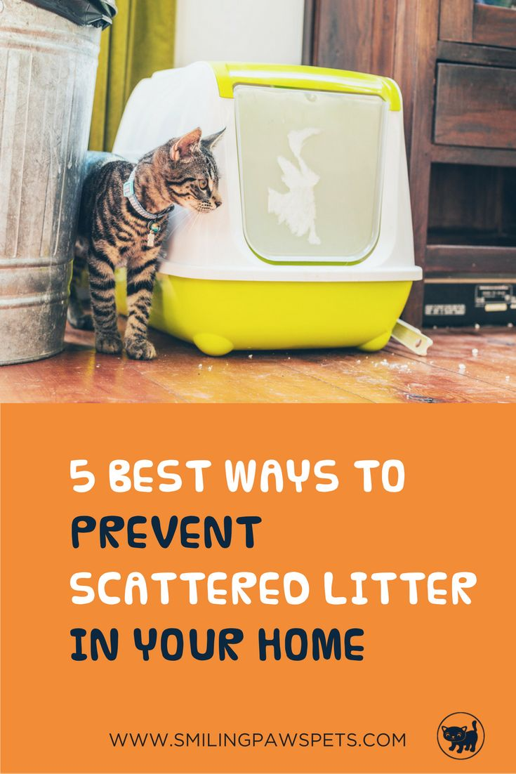Follow these tips and tricks and never again step on or find litter in your bed