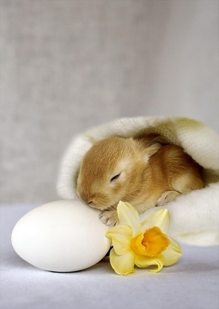 Time to color the eggs. So cute.: Animals, Eggs, So Cute, Colors, Pets, Funny, Pictures, Funnies