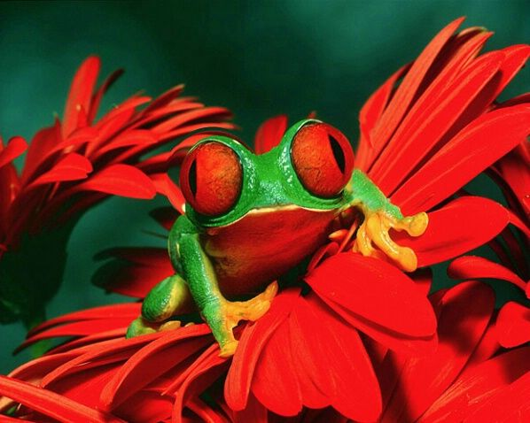 »✿❤Love Frogs!❤✿«