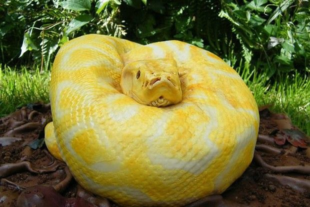 Snake cake by Francesca Pitcher: Cakes Tutorials, Kids Parties, Amazing Cakes, Stars Cakes, Daughters Birthday, Snakes Cakes, Halloween Food, Fondant Cakes, Birthday Cakes