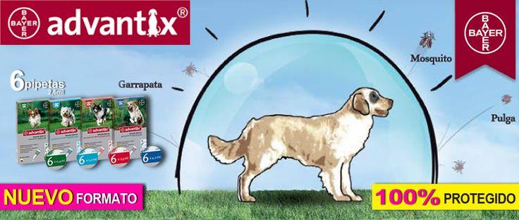 Antiparasitarios pulgas garrapatas lesmaniosis - Novedades para mascotas ...