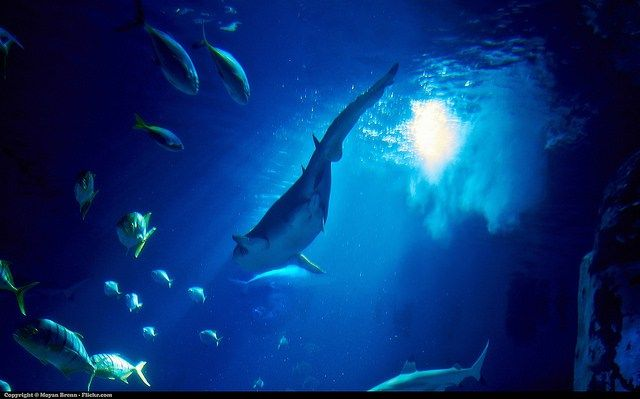 What Do You Know About Life in Salt Water? There a large number of interesting creatures of the weird, dangerous and just plain weird variety to be found in the depths of the ocean, which is of course – salt water. Test your knowledge of salt water environments by taking this quiz. #oceanscience #saltwater #sciencequiz #oceancreatures