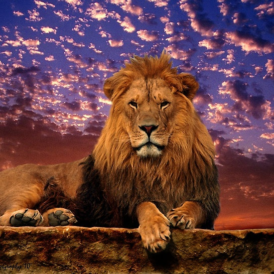 ~~The Great One ~ majestic lion by tigerwings~~
