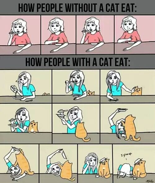 HA! So true! As I LITERALLY was doing that when I opened this pin! Lol! ~ How people without cats eat...