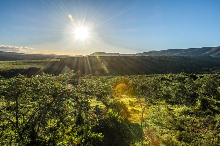 Safari in the Pumba Private Game Reserve   Sundown   South Africa