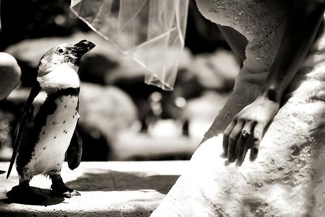 oh i wish: Devine Wedding, Cutie Patootie, Weddings, Groom