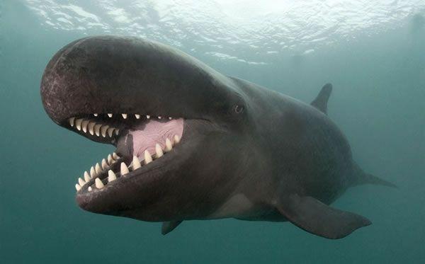 False Killer Whale Has Genuine Killer Smile - Neatorama