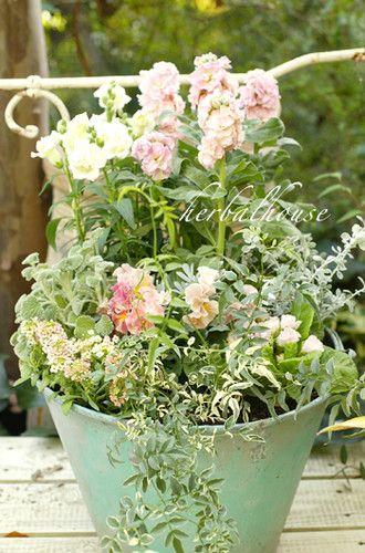 季節の変わり目になると、ついついその時期のお花で寄せ植えを作りたくなります。「どれとどれを組み合わせようかな?」とお花屋さんで悩む時間はとっても楽しいもの。そうして自分で作り上げた寄せ植えを玄関先などに飾ると、外出で家を出たとき、また帰ってきたとき、花々がなごやかに迎えてくれますよ!今回は夏の時期のお花を中心に、ぜひ真似してみたい美しい寄せ植えをご紹介していきます。