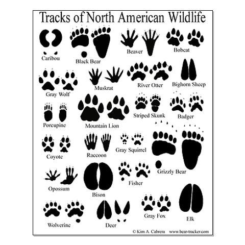 animal tracks guide posters