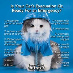 ♥ Cat Care Tips ♥  Tips for Evacuating with Cats... What you need to know in case of an emergency, and what should be in your pet's evacuation kit.