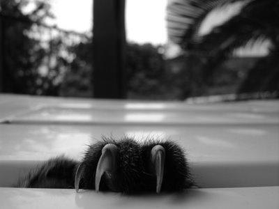 Black Cats ~  The Claw...  © Ricardo Nunes (Portugal)