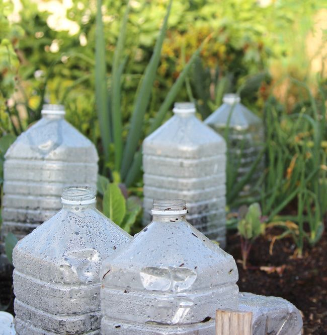 DIY bottle greenhouse and success tips! | A piece of rainbow blog