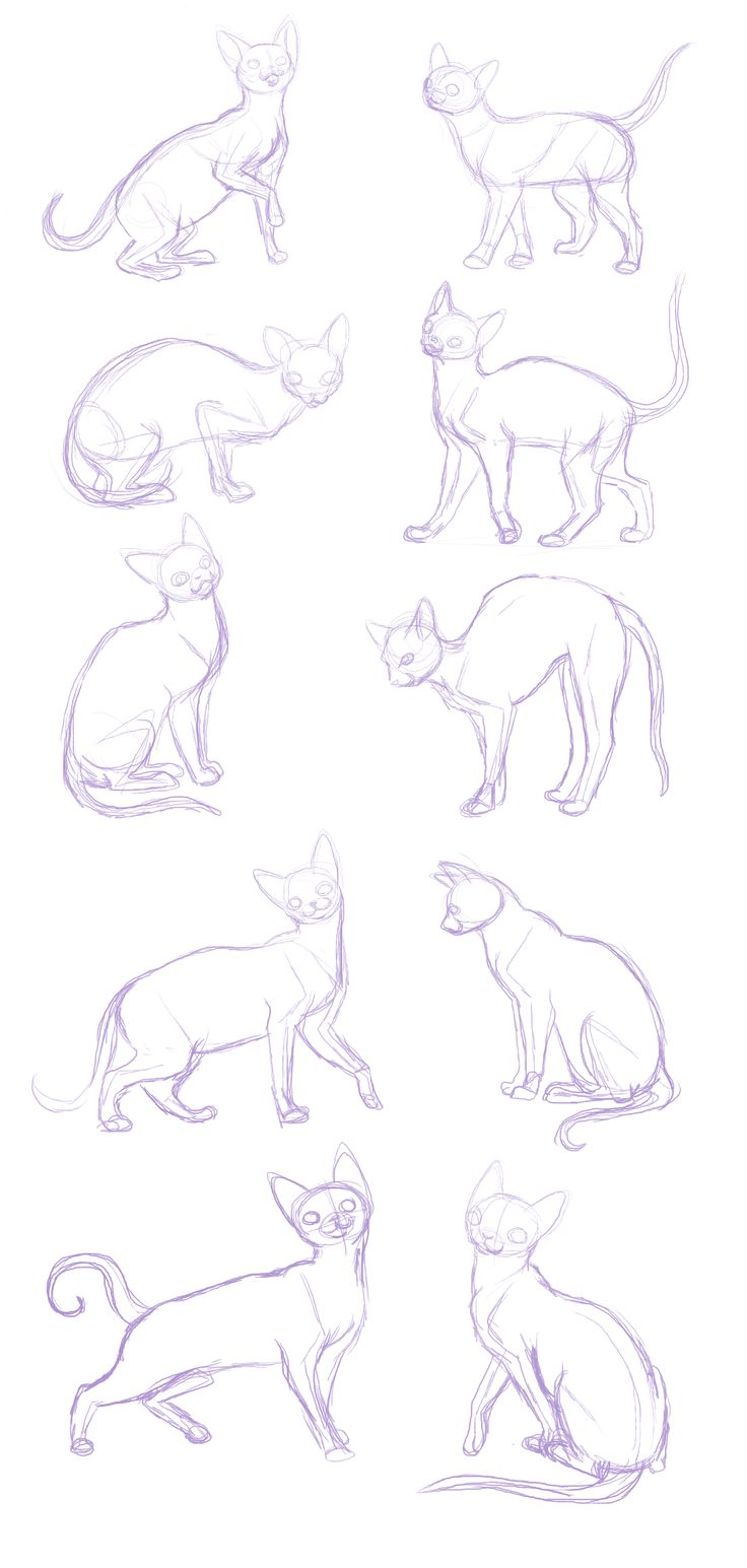 cat sketches-anatomy practice by BakaMichi.deviantart.com on @deviantART