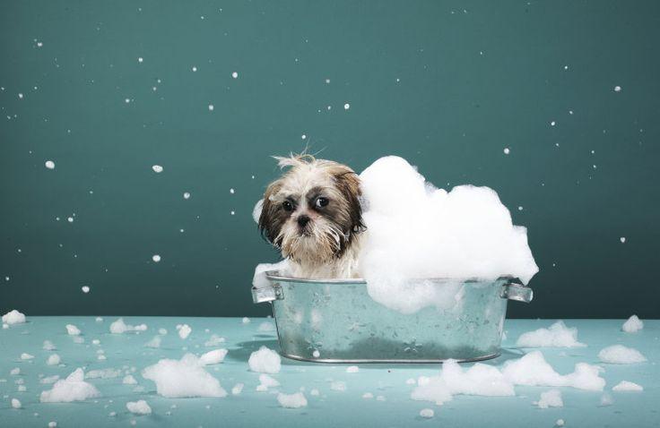 Siga estas dicas para manter a casa limpa e livre de doenças sem prejudicar seu animal de estimação.