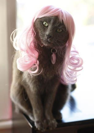 Is this site fur real? Sixty dollars for a wig... for your cat!?  Chicken, our lovely model, does look cute!!!