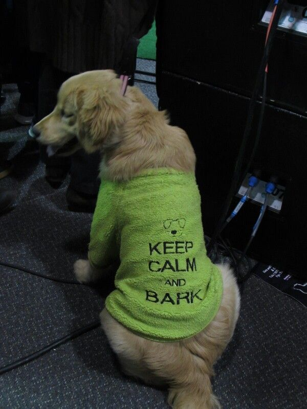 KeepCalmAnd bark!!