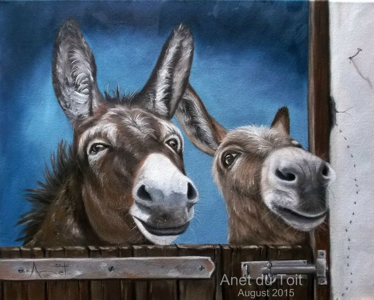 Donkey's Oil on canvas 50cm x 40cm SOLD