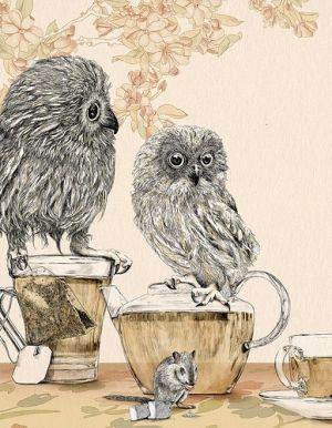 Tea Owls
