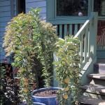 Wally Richards: Planning Your Fruit Trees