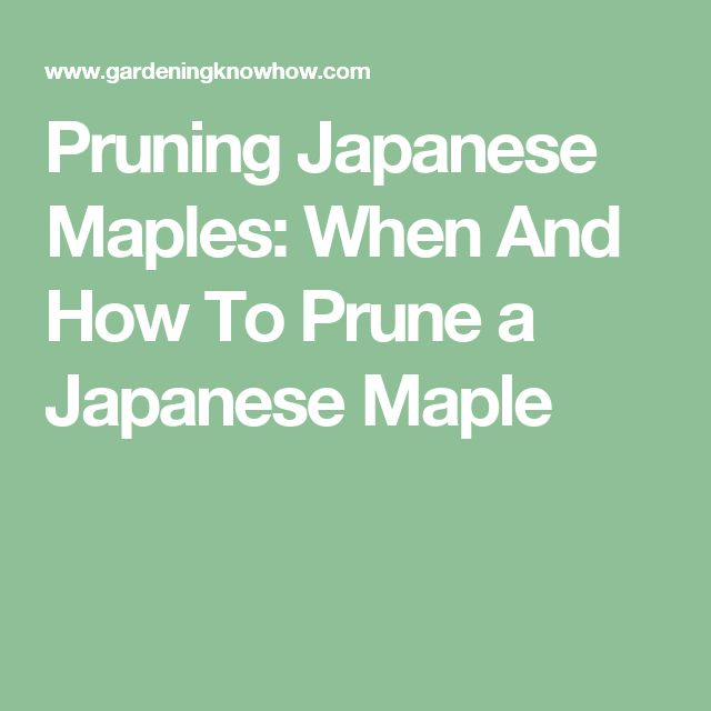 Pruning Japanese Maples: When And How To Prune a Japanese Maple