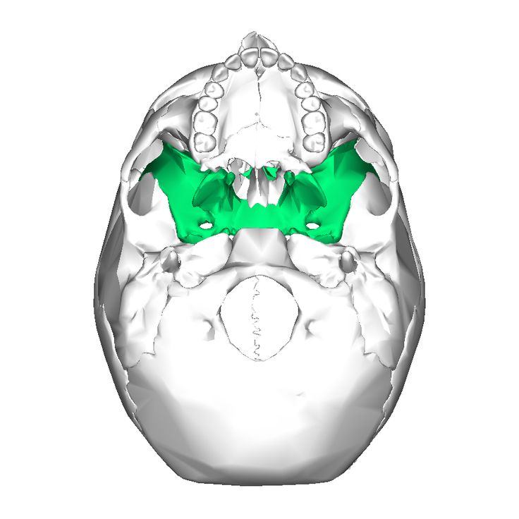 sphenoid bone adjustment – brownshelter, Human Body