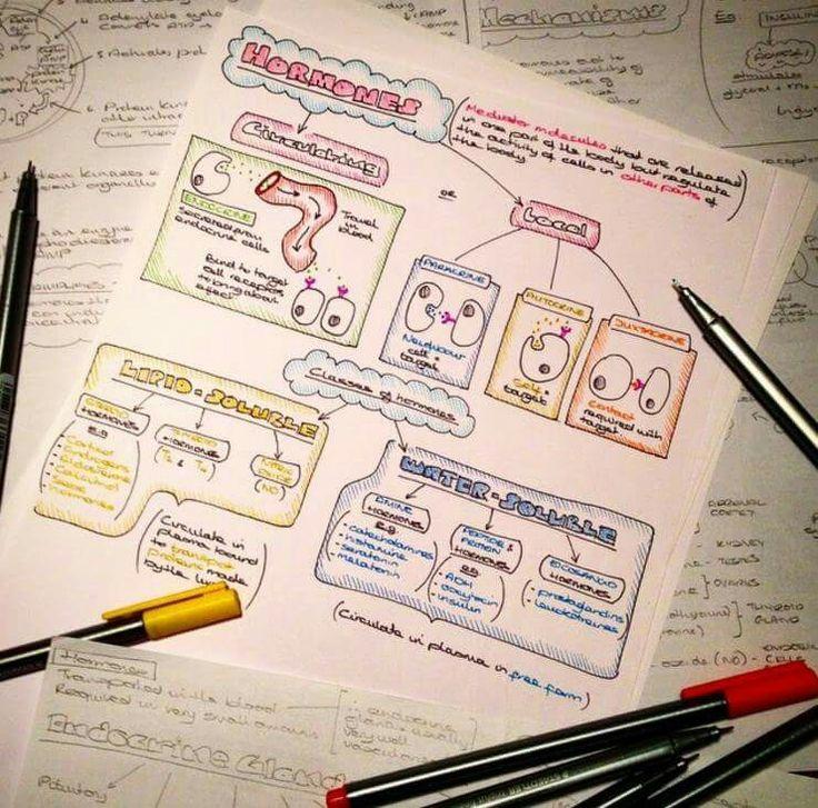 5 ways we study anatomy Flashcards | Quizlet