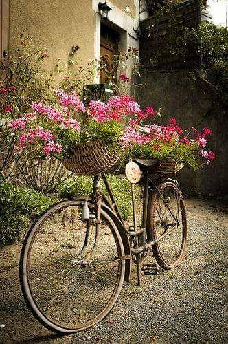 The Basket Bike Girl®