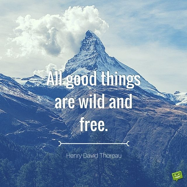All good things are wild and free. Henry David Thoreau.