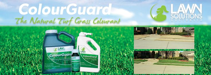 Colour your lawn | Grass Paint | Grass Colourant | Lilydale Instant Turf | Love your lawn | Great grass | Lily & Dale | Follow us | Garden Tips & Advice | Contact us | Lawn Solutions Australia